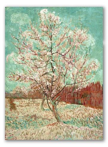 Pink Peach Tree